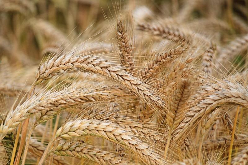 Il legame ancestrale tra i cereali e la birra